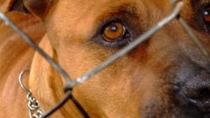 Штраф за собаку