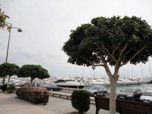 порт Камбрилса